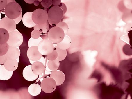 Retrouvez nos vins à Vinexpo