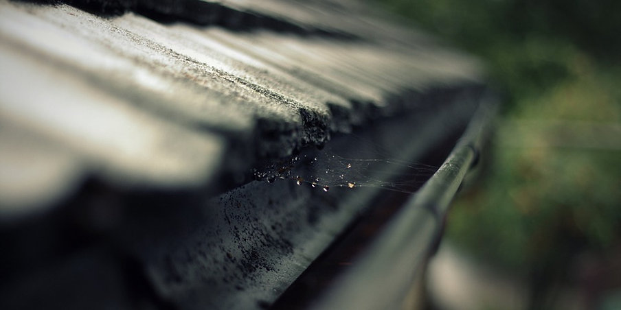 Pests in gutters - tips for taking care of your gutters
