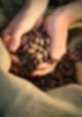 Foundry Chocolate