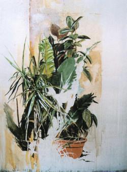 Piante sul pianerottolo, 1994