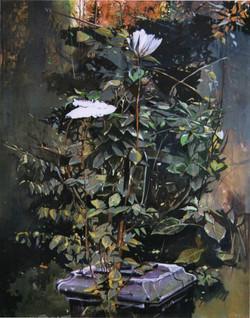 Il giardino di Rosetta, 1998