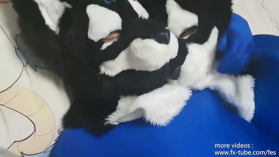 Two furry zentai play with toys