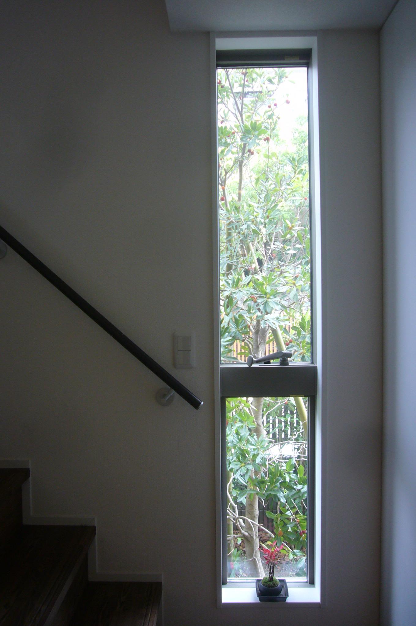 縦長窓からは、ヤマモモの樹が見えます
