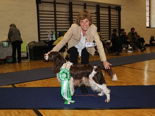 Titres Expositions canines Astuce de Vallaire