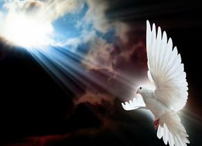 Os que confiam no Senhor renovam suas forças!