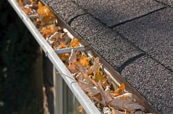 leaves-in-rain-gutter-24905780
