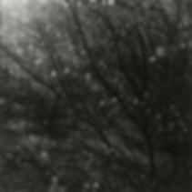 illuminated.jpg