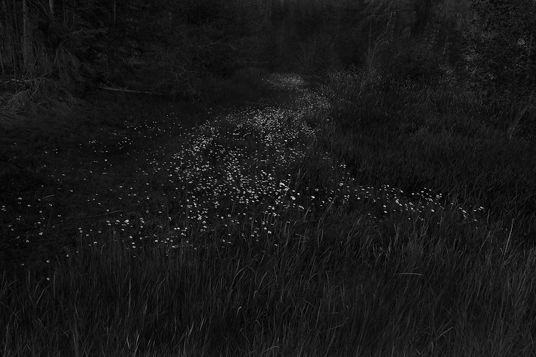 Forest+021.jpg