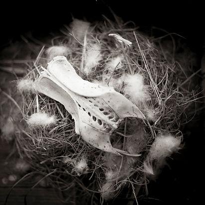 Skulls,+Nests+&+Feathers.jpg