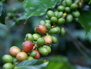 New Coffees Arriving