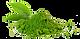 kisspng-matcha-green-tea-sencha-gyokuro-