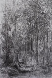 _Forest_#7 (1).jpeg