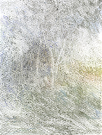 _Forest_#6 (1).jpg