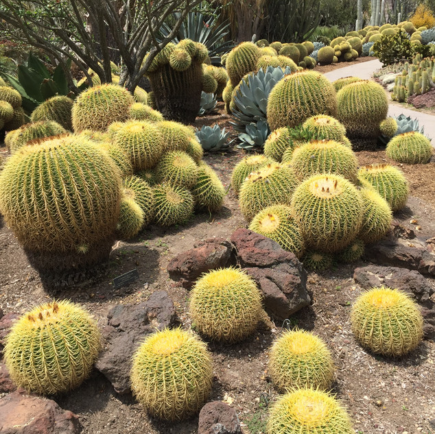 At the Huntington Library and Garden
