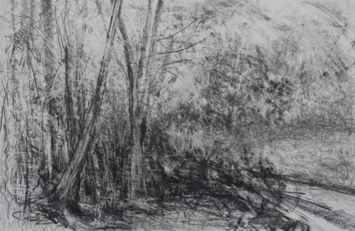 _Forest_#9.jpeg