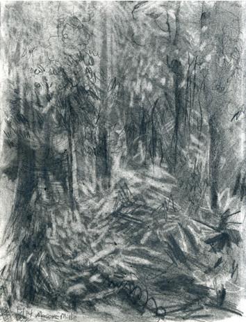 Farnell_Forest.jpg