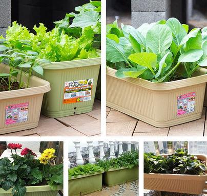 菜盆-綠色-700
