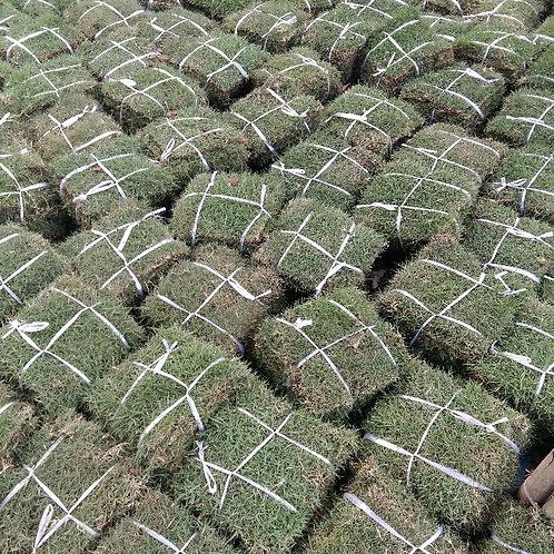 優質草皮-馬尼拉草皮