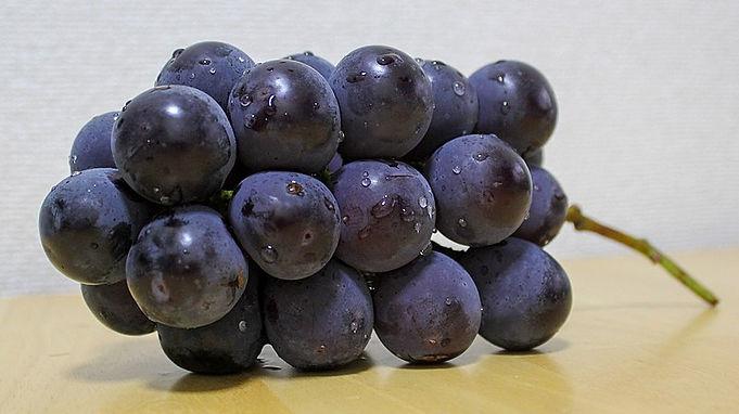 果樹-作物