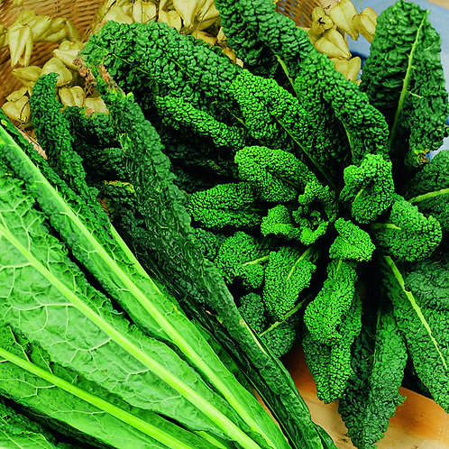 #10351-Kale Nero di Toscana Seeds