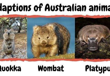 Adaptions of Australian animals