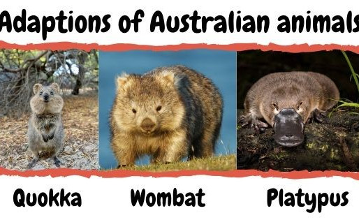 Adaptions of Australian animals