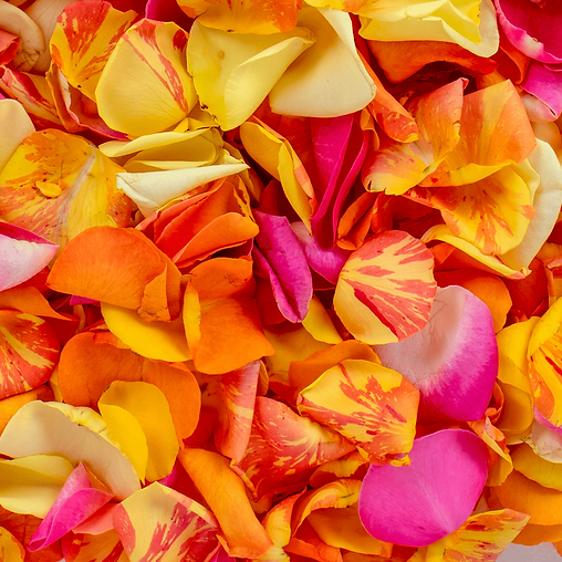 bright_mixed_fresh_rose_petals_confetti_flower_delivery_auckland-min.png