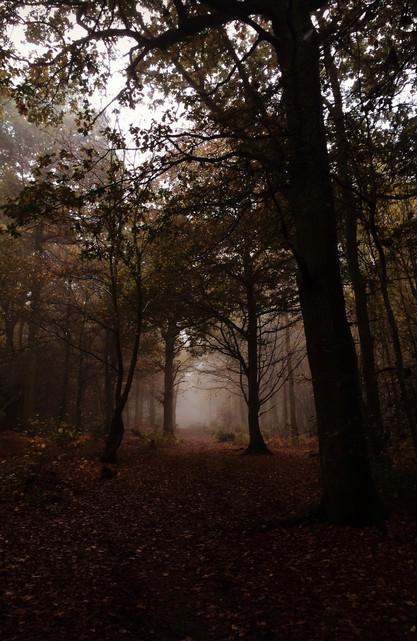 Misty woodland, UK
