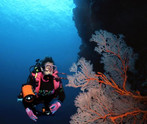 Great Barrier Reef Dive Centre For Sale