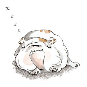 bulldog sleeping.jpg