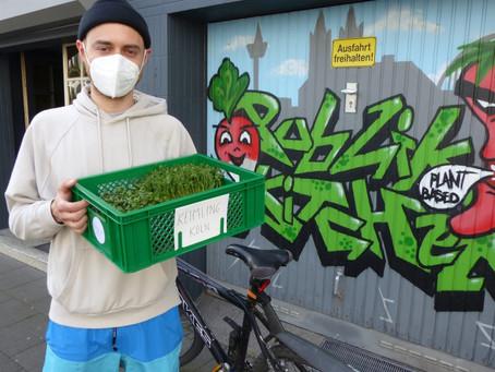 Frische Sprossen vom Hanfpad - Keimling Köln Microgreens