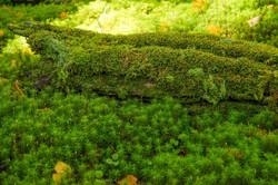 苔の森徹底撮影満喫ツアー