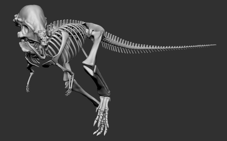 Pachycephalosaurus-wyomingensis_Skeletal