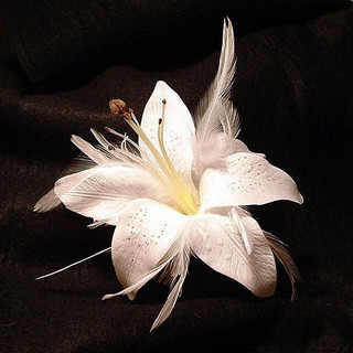 An elegant lily with soft feathers $68