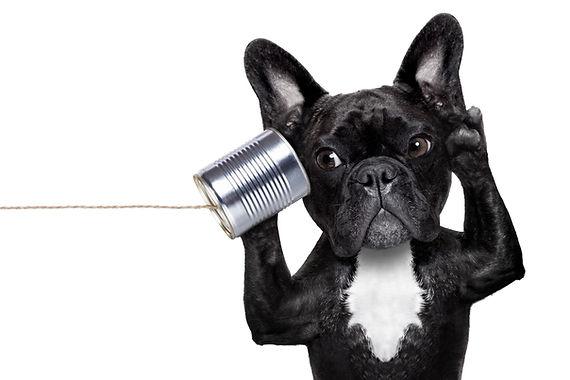 Dog Phone Telpehone.jpg