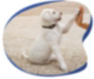 Hi-five with labrador puppy