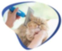 Hand brushing cat