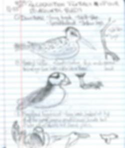 Jacinthe's birds.png