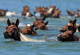saltwater-cowboy-jumbo.jpg