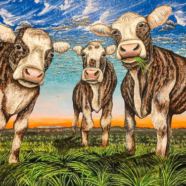 Tiger Striped Cows