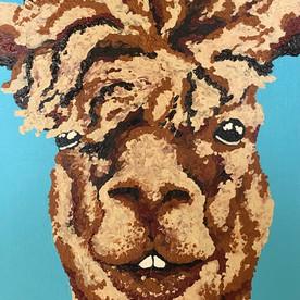 Albert the Llama