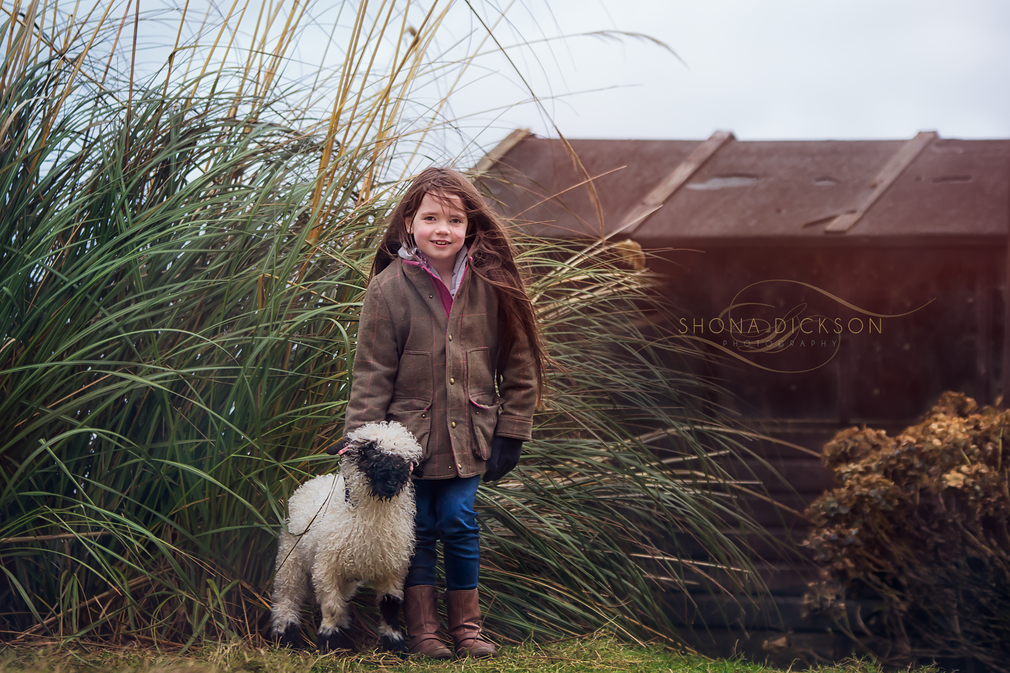 shona dickson photography, photographer dumfries, photographer galloway, pet photography dumfries, p