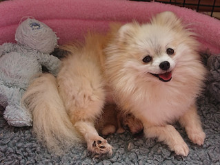 Spayed adult female IN HER NEW HOME NOW