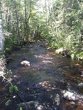 Beaverdam stream2.jpg