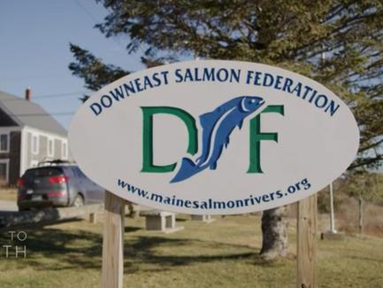 DSF Breakthrough: 14x Higher Return Rate for Maine Atlantic salmon