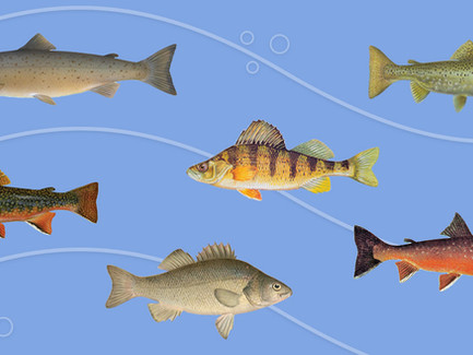 Know your Native Fish