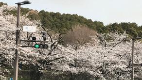 京都着物レンタル 極藤之嘉