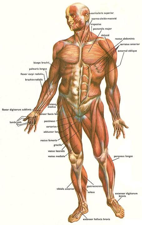 Massage, Pain Management,Therapeutic Massage,Plainfield, Avon, Fishers, Plainfield, brownsburg, indianapolis, indiana, www.madtherapy.com