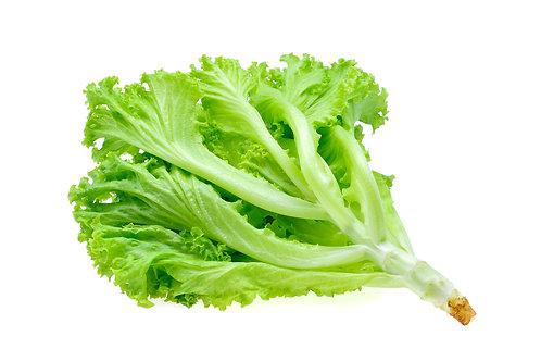 Bio Salat Endivie Lavata, Stk.