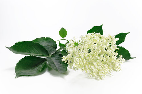 Bio Sirup Holunderblüten 5dl